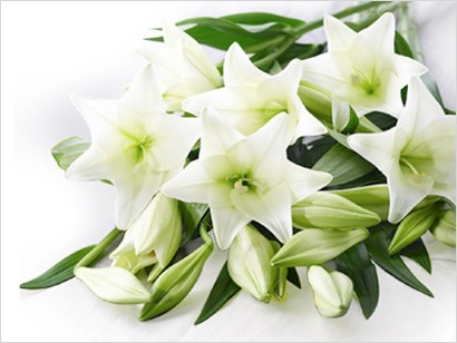 MuchLoved